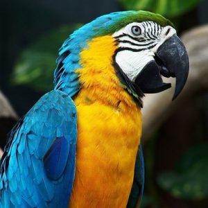 Quelle alimentation favoriser pour un perroquet : quels sont les besoins du perroquet en alimentation ?